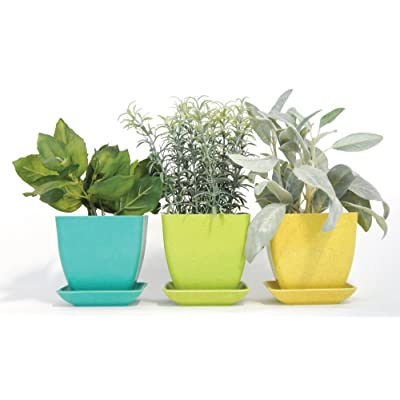 Herb Garden Kit, Pastel : Garden & Outdoor