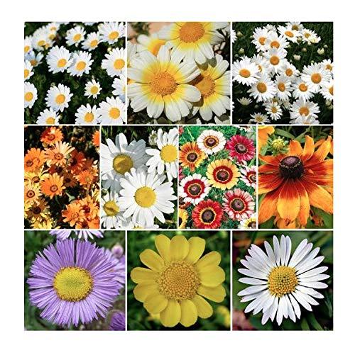 Daisy Flower Mix - Half Annual, Half Perennial and Sun to Partial Shade