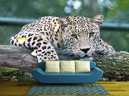 Leopard Lying on an Old Tree Trunk