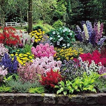 Cottage Garten 66 Pflanzen Amazonde Garten