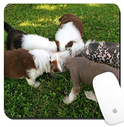 Luxlady Suqare Mousepad 8x8 Inch Mouse Pads/Mat design IMAGE ID 238476 Puppies Bearded Collies Beardies and Chinese Crested dogs eating from the bowl