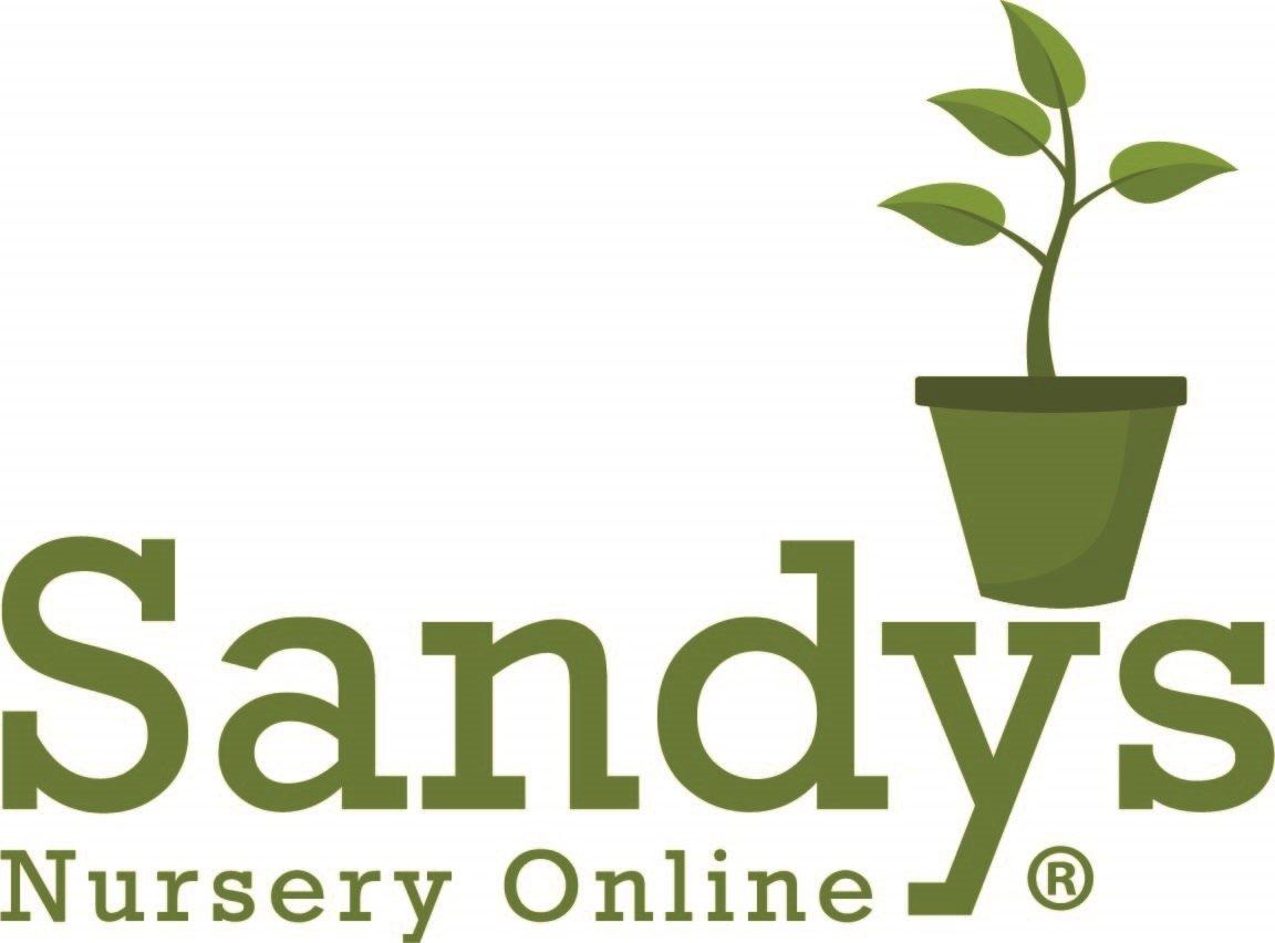 Sandys Nursery Online Juniper Blue Rug Ground Cover ~Lot of 30~4 inch Pot by Sandys Nursery Online (Image #6)