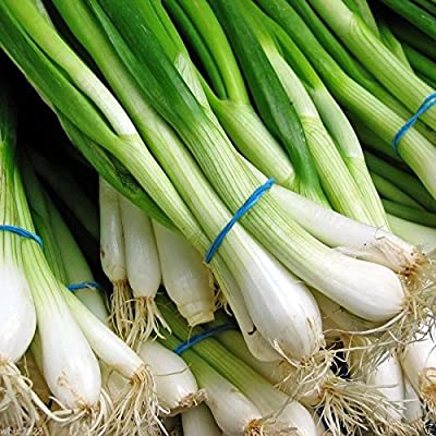 1000 Scallion Seeds, A.k.a Green Onion, Spring Onion. Grow Spring/ Late Summer/fall
