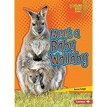 Meet a Baby Wallaby
