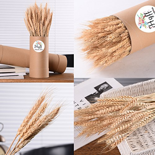 Review Natural Dried Wheat Bunches