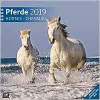 Pferde 2019 Broschürenkalender