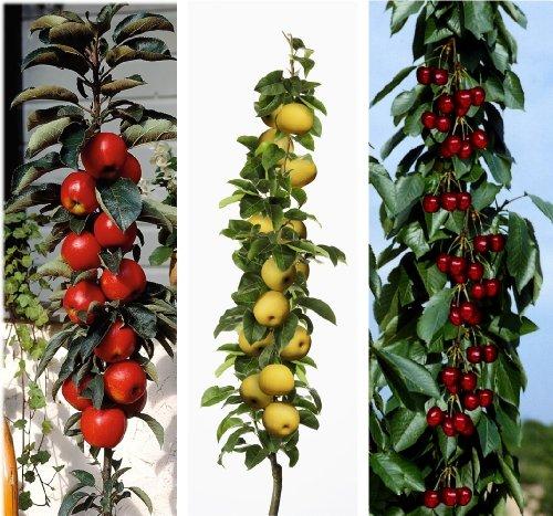 3er Set Säulenobst, Apfel