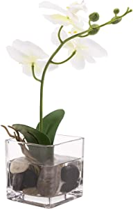 MyGift Mini White Artificial Faux Silk Phalaenopsis Orchid Flower in Square Glass Vase