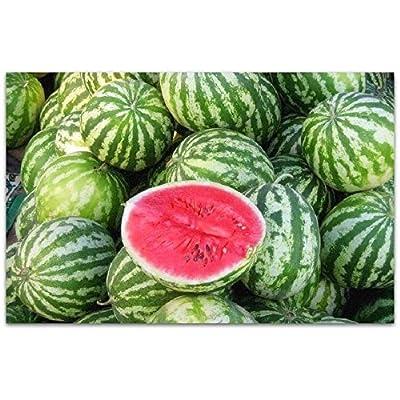 Seeds Vegetable Juicy Watermelon Astrakhan Garden from Ukraine 3 Gram : Garden & Outdoor