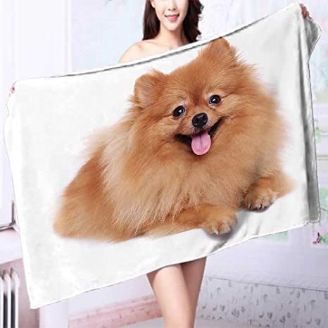 Amazon Com Premium 100 Cotton Bath Towel Brown Pomeranian Dog