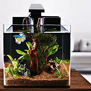 Iswees betta fish tank complete aquarium kit for Betta fish tanks amazon