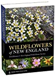 img - for Wildflowers of New England (A Timber Press Field Guide) book / textbook / text book