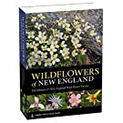 Wildflowers of New England (A Timber Press Field Guide)
