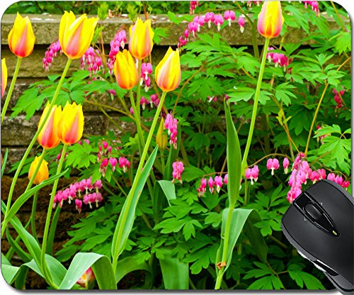 MSD Mousepad Mouse Pads/Mat design 29296711 Stain Resistance Kit Kitchen Table Top Desk C A pretty cluster of Blushing Beauty tulips and bleeding hearts growing in front of (Front Cluster)