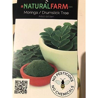 AchmadAnam - Live Plant - Live Moringa Plant - Established - Naturally & Organically Grown - Chemical Free Permaculture Plant - Non-GMO (No Fertilizer). E7 : Garden & Outdoor