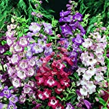 Penstemon Seeds - Sensation Mix - Packet, Mixed Color Blooms/Prefers Full Sun Exposure, Flower Seeds