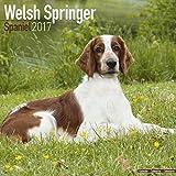 Welsh Springer Spaniel Calendar 2017 - Dog Breed Calendars - 2016 - 2017 wall calendars - 16 Month by Avonside
