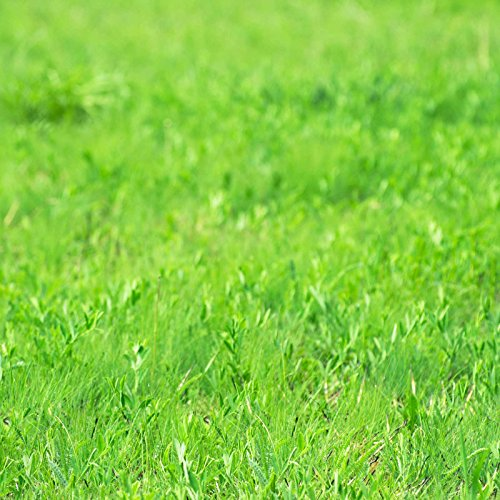 Grass Seeds - Irrigated Pasture Mix - 50 Lbs Bulk - Tall Fescue, Perennial Ryegrass, Meadow Brome, Orchardgrass by Mountain Valley Seed Company