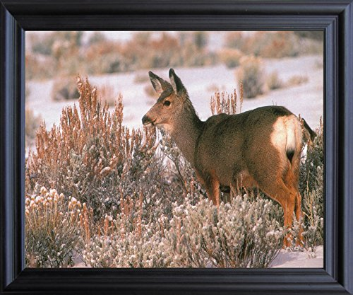 Large Mule Deer in Snow Wild Animal Hunting Wall Decor Black Framed Picture Art