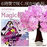マジック桜 (コノハナ)