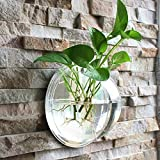 Surlan Wall Hanging Plant Vase, Hanging Round Glass Plant Pots Air Plant Pots Flower Vase Terrariums Wall Plant Container Fish Bowl Diameter 15cm/6in