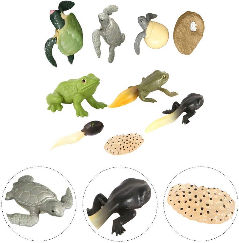 Wakauto Juguetes de Modelo de Ciencia de Biología 2 Sets Modelo de Etapa de Crecimiento de Rana Modelo de Etapa de Crecimiento de Rana Resistente Y Duradero Modelo de