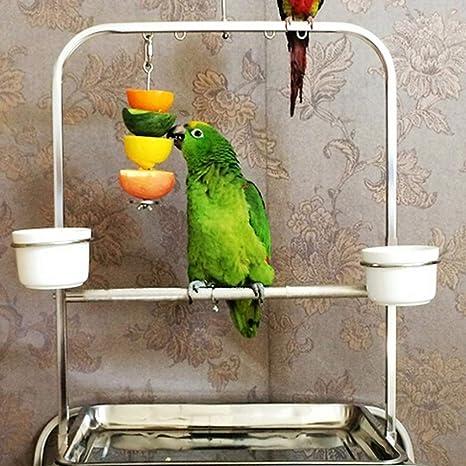 Yardwe 2Pcs Comederos para Pájaros Soporte para Alimentos para Pájaros Soporte para Palo de Vegetales de Fruta de Loro de Acero Inoxidable Juguete de Forrajeo Brocheta para Tratar Aves: Amazon.es: Bricolaje y