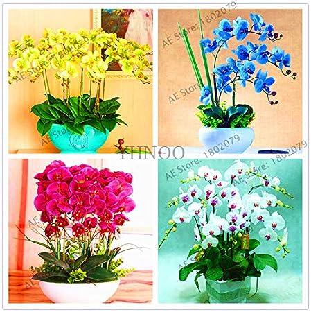 100Pcs Phalaenopsis Orchid Seeds Bonsai Butterfly Flower Indoor Garden Plants