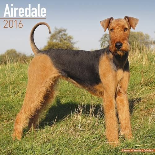 Airedale Calendar - Only Dog Breed Airedales Calendar - 2016 Wall calendars - Dog Calendars - Monthly Wall Calendar by Avonside pdf epub