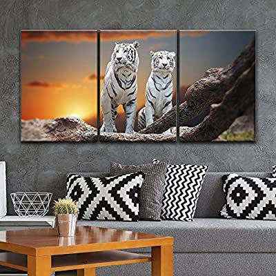 Wonderful Composition, Premium Product, 3 Panel Two White Tigers at Sunset Time x 3 Panels