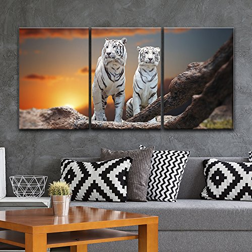 3 Panel Two White Tigers at Sunset Time x 3 Panels