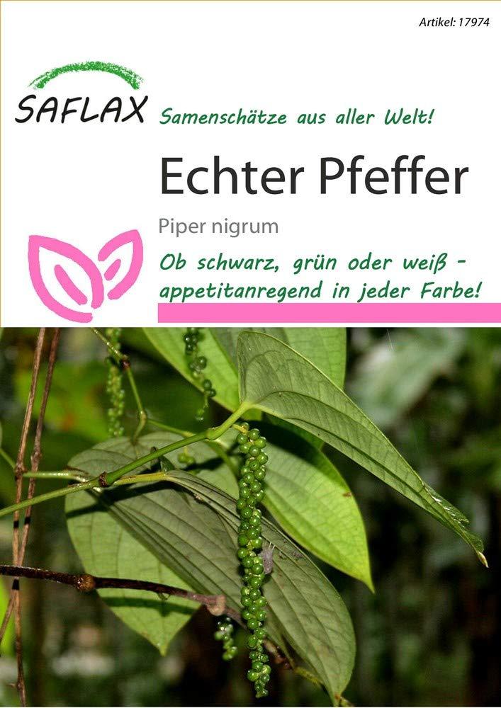 Shirtzshop - exóticas semillas pimienta de saflax: Amazon.es ...