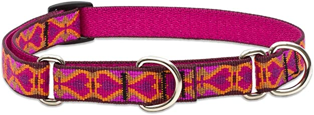 Lupine 3/4-Inch Heart 2 Heart  Martingale Combo Collar for Medium to Large Dogs