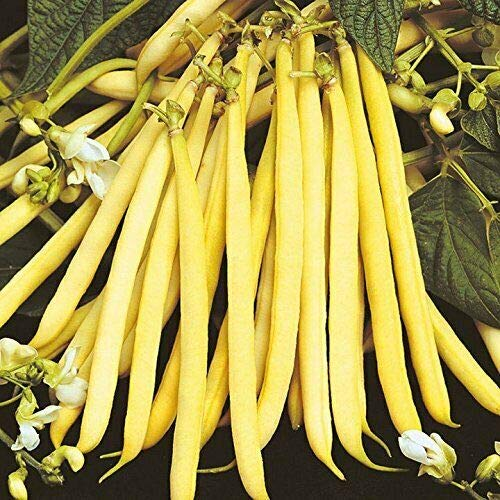 (200 Seeds Heirloom Yellow Wax Bean Pole Kentucky Wonder - Very Productive LongPods)
