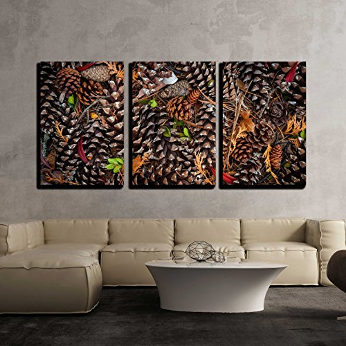 wall26 - 3 Piece Canvas Wall Art - Various Pine Cones on Forest Floor, View from Above - Modern Home Decor Stretched and Framed Ready to Hang - 16