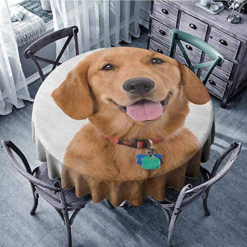 ScottDecor Restaurant Round Tablecloth Table Cover Golden Retriever,Portrait of Young Pedigreed Dog Wearing a Collar and Tags Domestic Animal, Multicolor Diameter 54