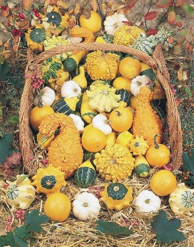2g (Approx. 30) Ornamental Pumpkin and Gourd Seeds Bot.: