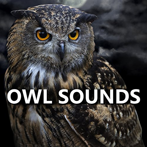 Sounds of Owls by Owl ...