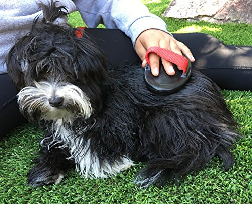 how to make leave in conditioner for dogs
