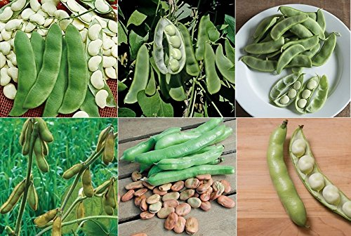 Bean Variety Pack - David's Garden Seeds Collection Set Bean Fava, Lima, Soy PL091 (Multi) 6 Varieties 300 Plus Seeds (Non-GMO, Open Pollinated, Heirloom, Organic)
