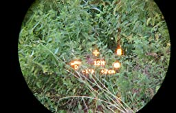Bushnell Fernglas Mit Entfernungsmesser Fusion 1 Mile Arc 12x50 : Bushnell fernglas mit laser entfernungsmesser fusion mile arc