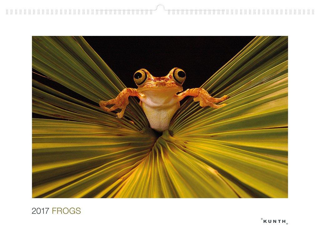 2017 Frogs: KUNTH-Kalender (KUNTH Wandkalender Hochformat)