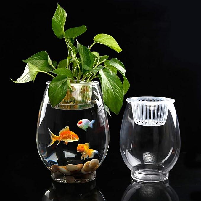 Ailihan Cristal florero agua cultivo cocodrilo pera árbol verde cebolla Jacinto pecera planta regalo en maceta: Amazon.es: Jardín