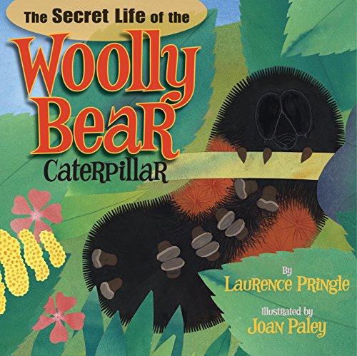 (The Secret Life of the Woolly Bear Caterpillar)