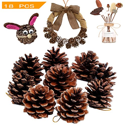 The 10 best small pine cones for crafts
