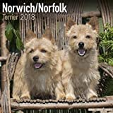 Norwich/Norfolk Terrier Calendar - Dog Breed Calendars - 2017 - 2018 wall Calendars - 16 Month by Avonside