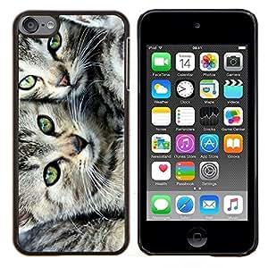YiPhone /// Prima de resorte delgada de la cubierta del caso de Shell Armor - Los gatitos American Shorthair Wirehair la Isla de Man - Apple iPod Touch 6 6th Touch6