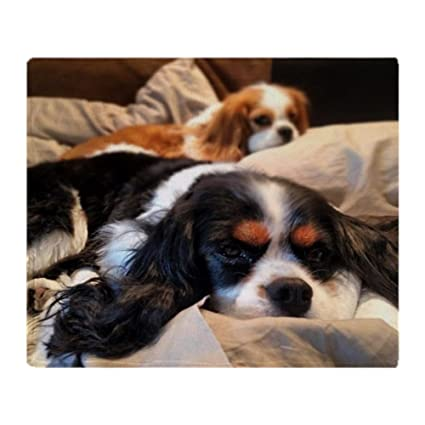 7238f3f4afec Amazon.com: CafePress Cavalier King Charles Spaniels Soft Fleece Throw  Blanket, 50