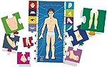 Brinquedo Pedagógico Madeira Conheça o Corpo Humano Brincadeira De Criança