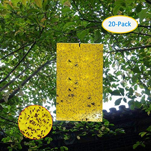 Garsum 20-Pack Dual-Sided Yellow Sticky Traps for Flying Plant Insect Like Fungus Gnats, Aphids, Whiteflies, Leafminers